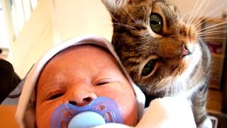 Кошки и младенцы: Первое знакомство - Cats and babies - Подборка приколов