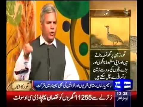 Houbara bustard hunting in Rahim Yar Khan - YouTube