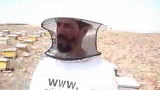 Visite de ruche d'abeille marocain PART 1