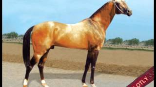 Akhal-Teke Turkmen horses