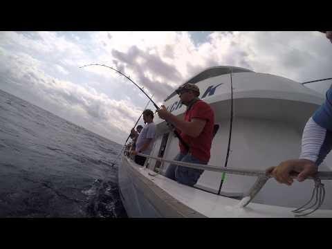 Blackfin Tuna caught of Kelly Fishing Fleet 2015