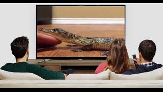 animal tv show | animal tv live | animal tv series | animal tv commercial | animal tv kids