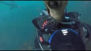 Нападения под водой на людей ( жесть)