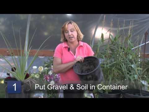 How to Grow Stevia Plants