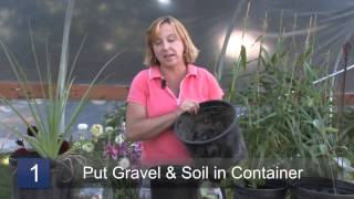 How to Grow Stevia Plants