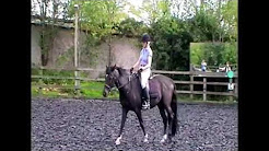Horse Riding: The pelvis and lower back