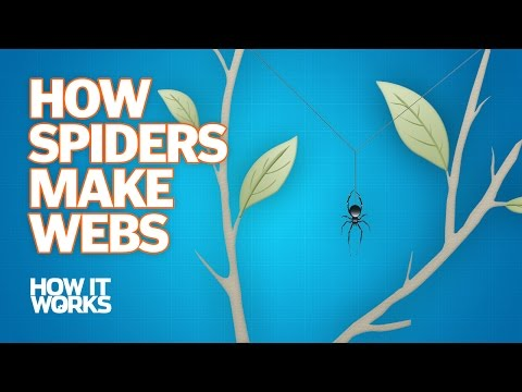How Spiders Make Webs