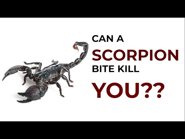 Can a Scorpion Bite kill you ? Are all Scorpion Poisonous ? क्या बिच्छू का डांक घातक है ?