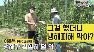 [한국농수산TV] 그걸 했더니 냉해피해 막어?? 경북 …
