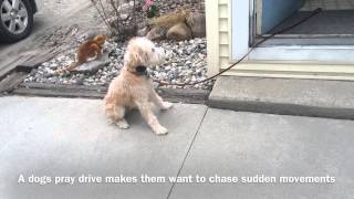 Doorway Manners - Dog Psychology And Training Center
