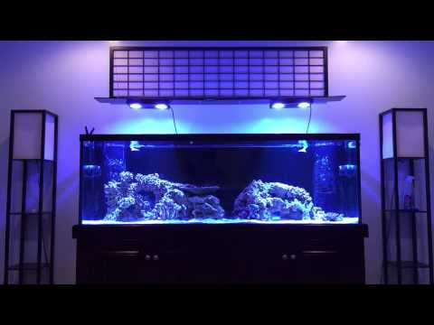 How to aquascape a reef tank