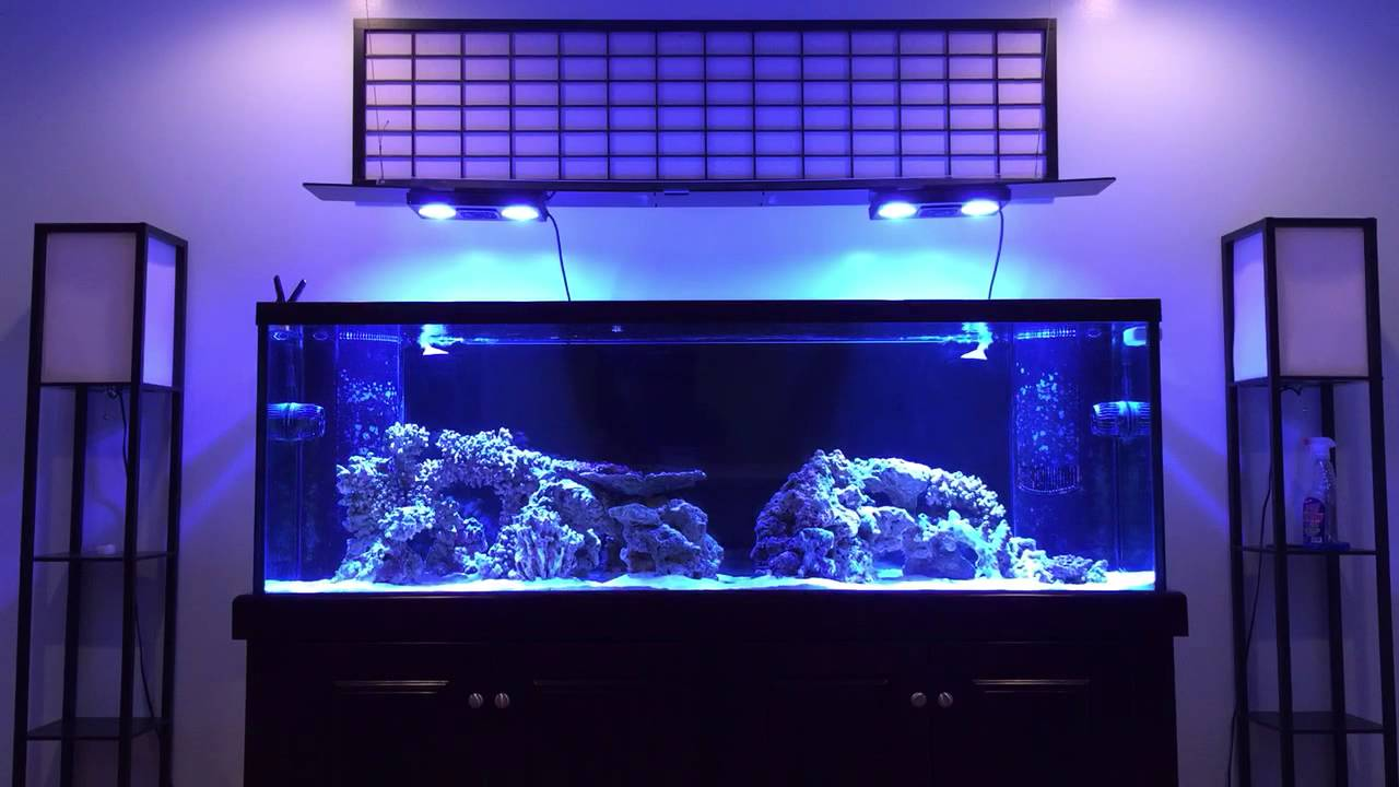 How To Aquascape A Reef Tank Youtube