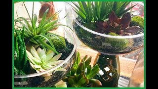 ~DOLLAR TREE DIY - Spring Celtic Succulent Planter's- Fairy Garden~