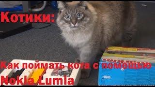 Котики: Как поймать/выманить кота при помощи телефона Nokia Lumia 730 - шокирующая правда о Nokia