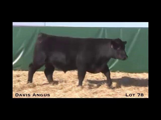 Davis Angus Lot 78