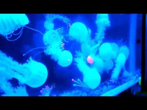 Glowing Artificial Jellyfish Mood Lamp Aquarium Canada [www.waterfallnow.com]