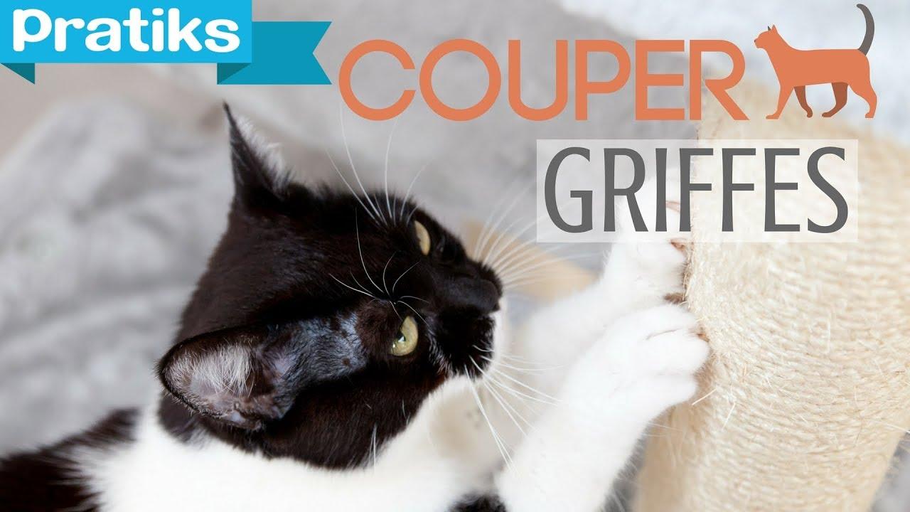Conseils v to comment couper les griffes de son chat - Comment couper des parties d une video ...