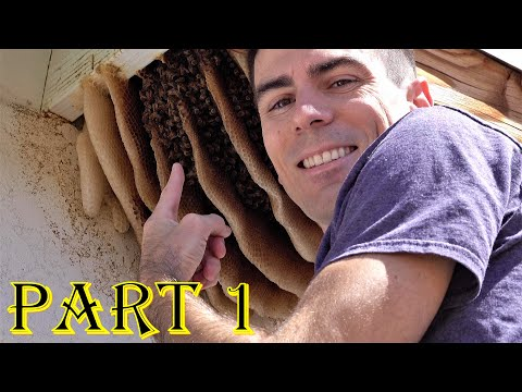 My New Bee Hive! Honey? Not Easy To Get! Snake Search & Swarm. Funny Nature & Fun Travel, West US Mp3