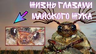 Сериал «Жизнь глазами майского жука» 1 серия (Меня поймали)