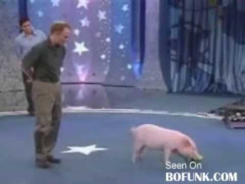 Video Xiếc lợn _)) - Clip Xiếc lợn _)) -.flv