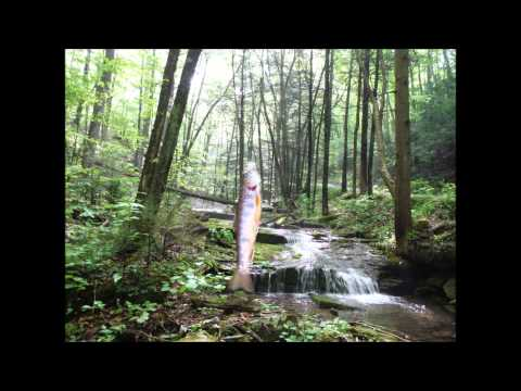 Camp Little Pine Creek