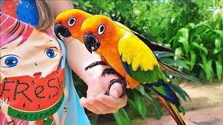 Bebé jugando en el zoológico y alimenta animales divertidos Video para niños