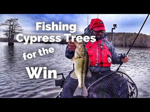 The Bass Fishing Pattern That Won The KBF National Championship On Caddo Lake