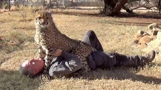 Loved By Affectionate African Cheetah Cat - Man & Cheetah Are Best Friends - Saying Goodbye MMA Way
