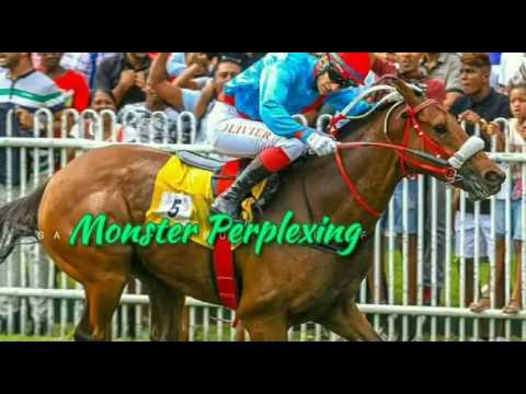 Meeting 5| Season 2019| All Races Full| Mauritius| Champ De Mars