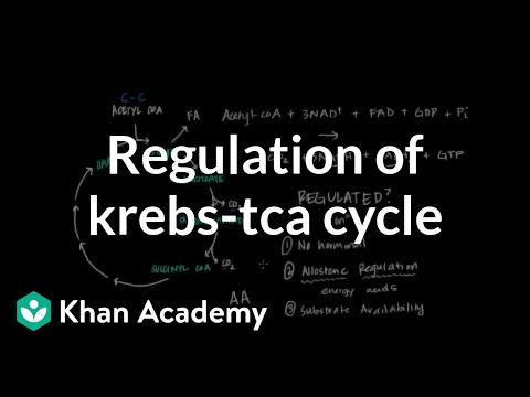 Regulation of Krebs / Citric Acid Cycle