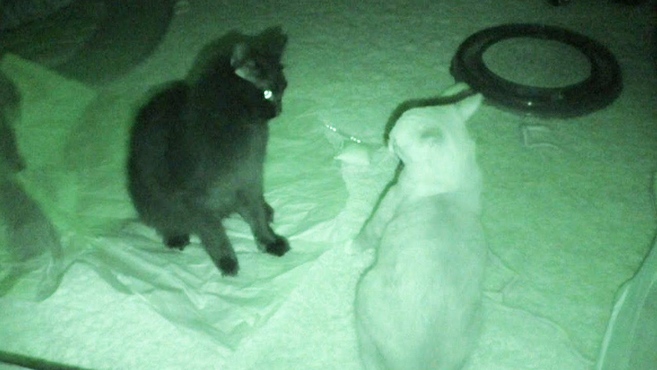 low odor cat litter box