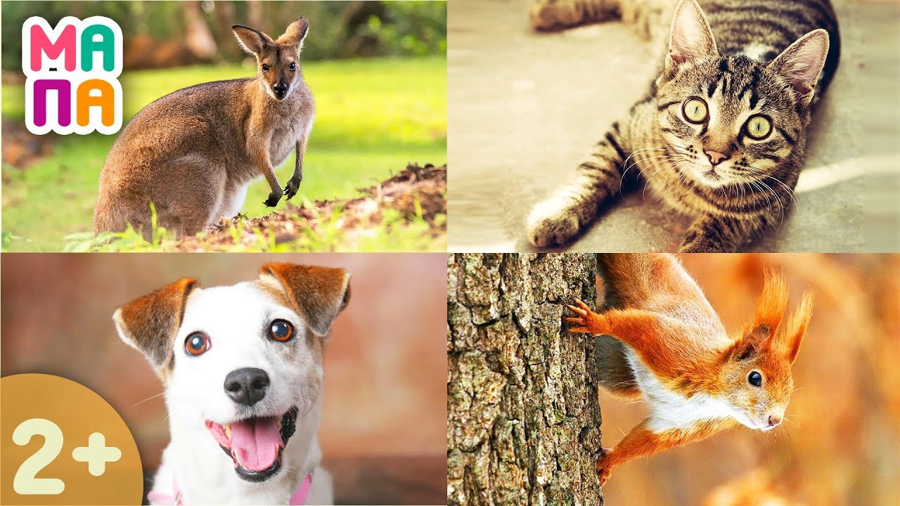 Как говорят животные развивающее видео | видео учим домашних животных