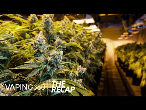 FDA Intervention in Marijuana Possible, NY Vaping Ban, New Giveaways and More | The ReCap