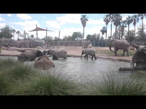 Elephants at the Reid Park Zoo part 1