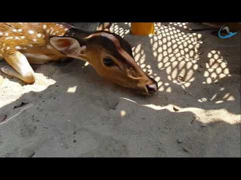 Bukit Tinggi Animal park Malaysia