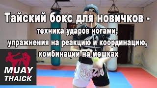 Тайский бокс для новичков дома - техника ударов ногами, упражнения на реакцию, комбинации