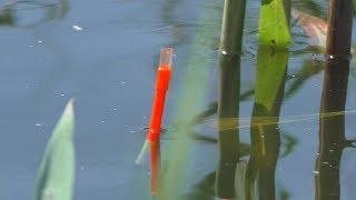 Рыбалка на поплавок с лодки в камышах. My fishing