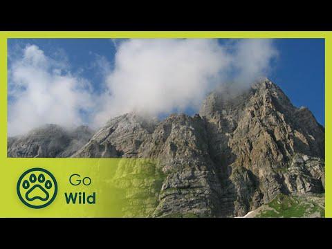 The Carnic Alps - Nature's Treasure Trove - The Secrets of Nature