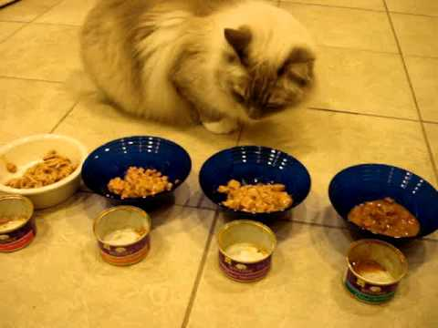 No Grain Canned Cat Food