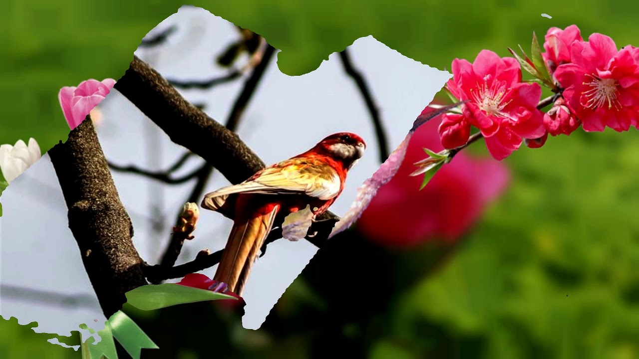 Spring Flowers And Birds Hd1080p Youtube