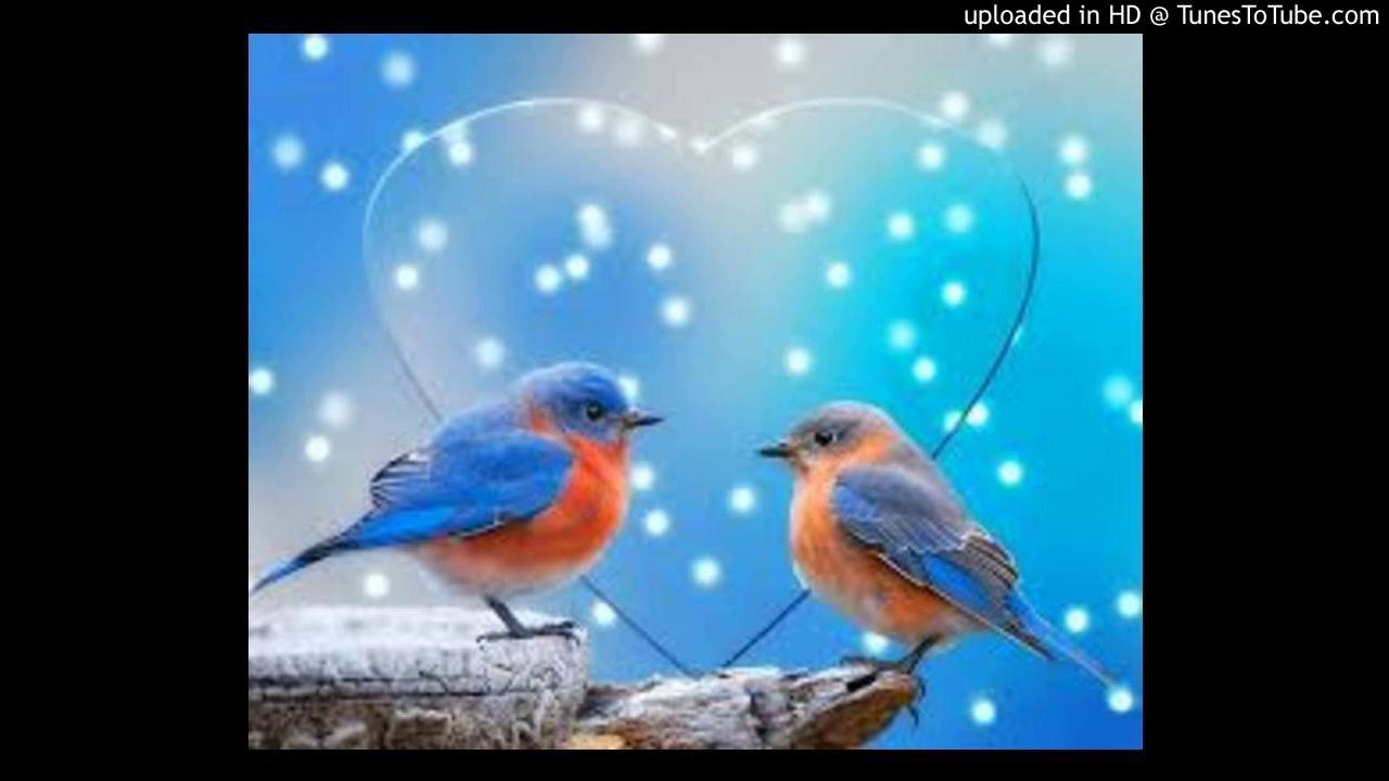 Ehsan Sehgal Prose Poems-My Love Bird – The Waves Of Love