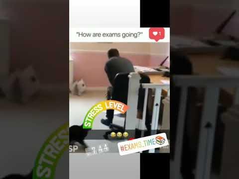 Exam Stress Whatsapp Status Youtube