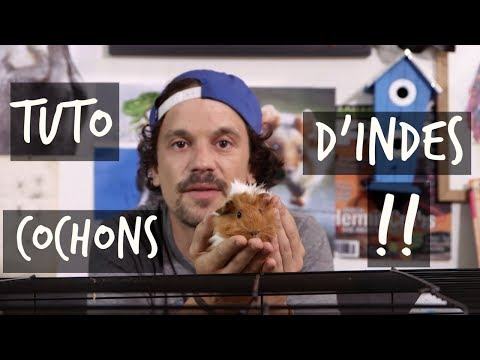TUTO COCHONS D'INDE !! - TOOPET