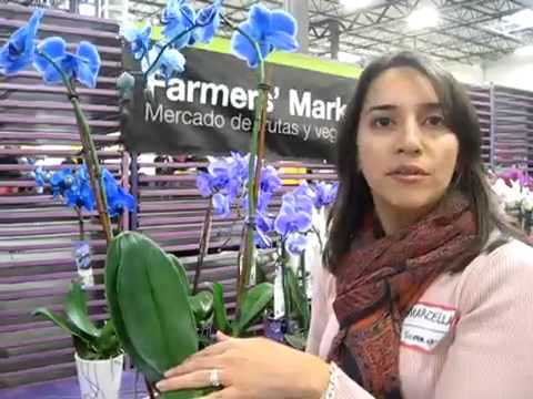 Mystiques By Silver Vase Bell Nursery Youtube