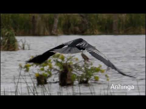 Viera Wetlands, Florida