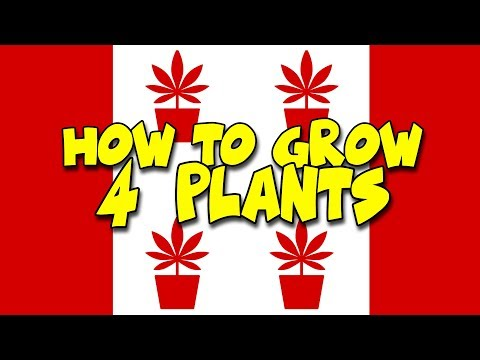 How To Grow 4 Cannabis Plants In Canada - Fully Legal Indoor Tent LED Autoflower - Oct 17th
