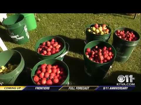 Harvesting Alaska: Apple farmer helps others