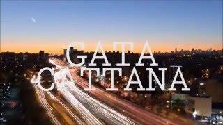 Gata Cattana  - Gotham