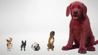 Clifford the Big Ręd Dog (2021) Movie Teaser Trailer