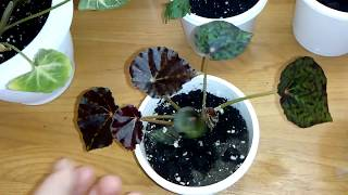 Комнатные цветы. Обзор растений от Марины.